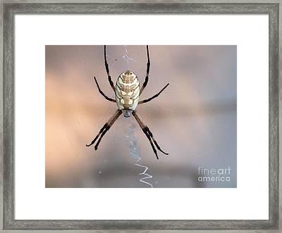 Arachnid Framed Print