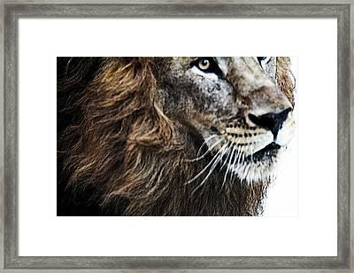 Aramis Framed Print by Elizabeth Hart