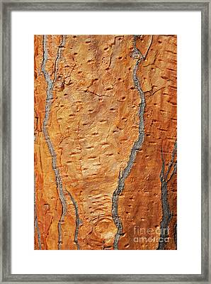 Arborescent Giant Prickly Pear Cactus Framed Print by Sami Sarkis