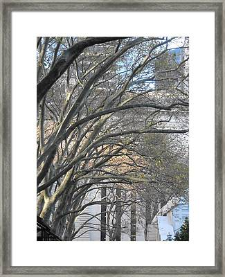 Arched Trees Framed Print by Kimberly Perry