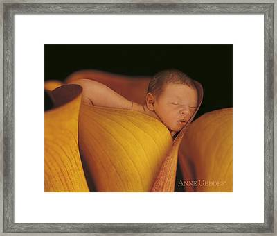 Calla Lily Framed Print featuring the photograph Archie In Calla Lily by Anne Geddes