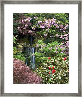 Arching Cherry Blossoms Framed Print
