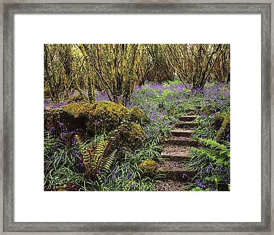 Ardcarrig Gardens, Co Galway, Ireland Framed Print by The Irish Image Collection