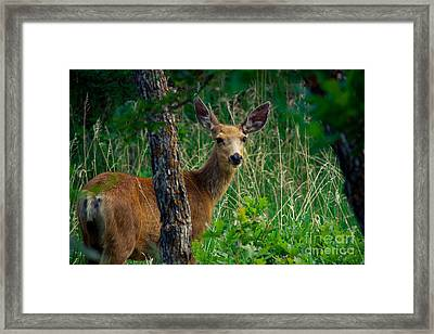 Are You Following Me Framed Print