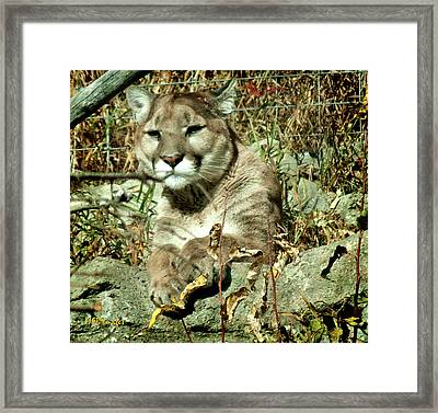 Are You Looking At Me Framed Print by Margaret Buchanan