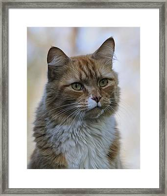 Are You Serious Framed Print