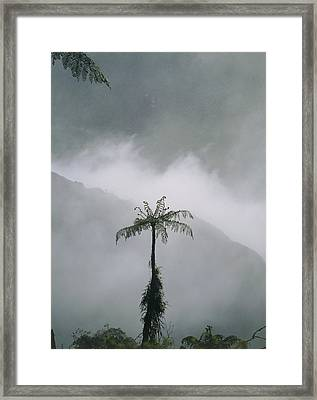 Area Of Cleared Cloudforest, Juval Valley, Ecuador Framed Print