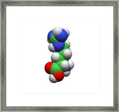 Arginine Molecule Framed Print by Dr Tim Evans