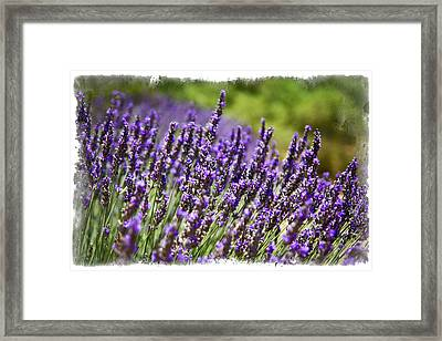 Framed Print featuring the photograph Arid Bundles by Ryan Weddle
