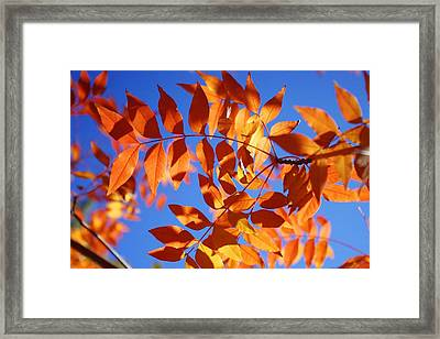 Framed Print featuring the photograph Arizona Fall 1 by David Rizzo