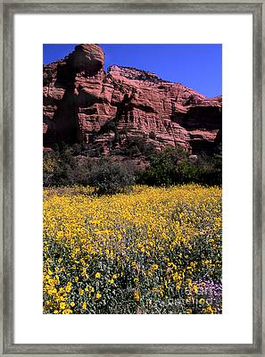 Arizona Flower Field Framed Print by Barry Shaffer