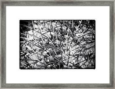 Arizona Web Framed Print
