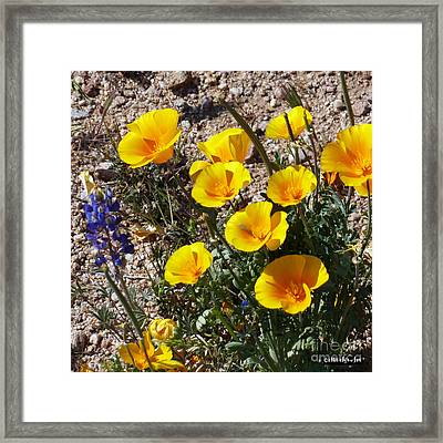 Arizona Wildflowers 2 Framed Print by Methune Hively