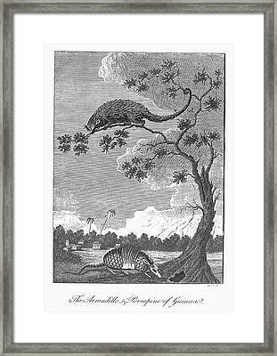 Armadillo & Porcupine, 1796 Framed Print by Granger