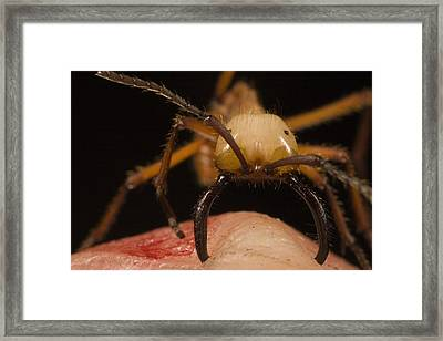 Army Ant Eciton Biting Finger Framed Print by Mark Moffett