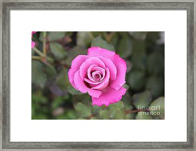 Arose-atherapy Framed Print by Scenesational Photos