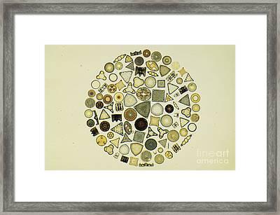 Arrangement Of Diatoms Framed Print by M. I. Walker