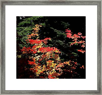 Framed Print featuring the photograph Arrival Of Autumn by Nick Kloepping