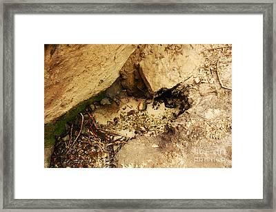 Artesian Spring Framed Print by Juan Romagosa