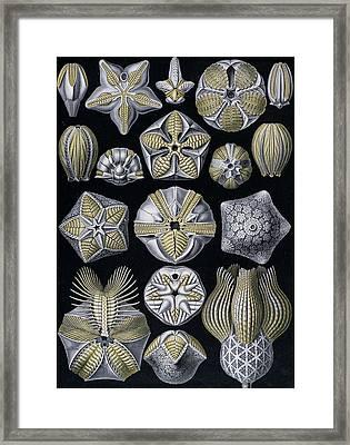 Artforms Of Nature Framed Print