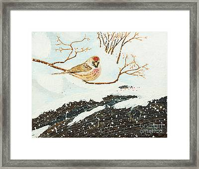 Artic Redpoll Framed Print