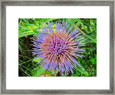 Artichoke Blossom Framed Print by Sean Griffin