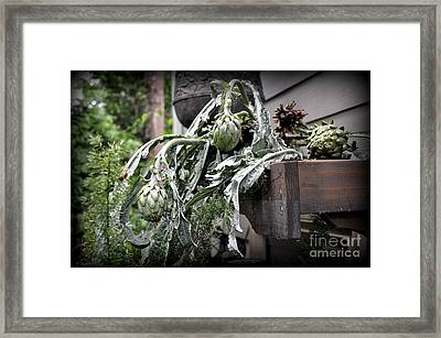 Framed Print featuring the photograph Artichoke by Tanya  Searcy