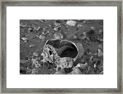 Artistic Shell Framed Print by Betsy Knapp