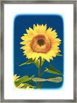Framed Print featuring the photograph Artsy Sunflower by Nancy De Flon