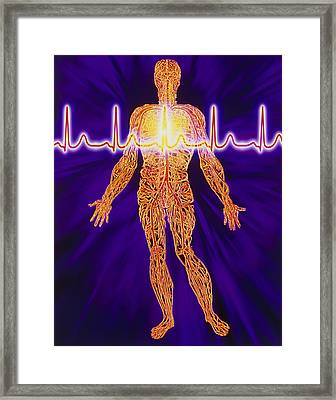 Artwork Of Human Venous System And Ecg Heart Trace Framed Print by Mehau Kulyk