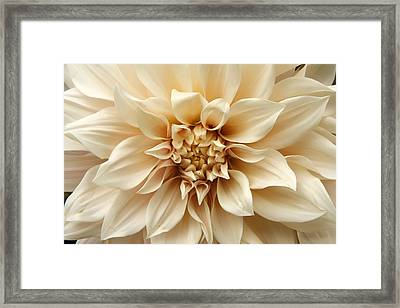 Arundel Blossom Framed Print