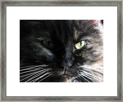 Arwen Framed Print by Chris Gudger