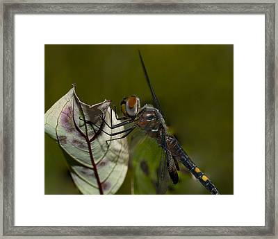 As Close As You Can Be Framed Print by Jack Zulli