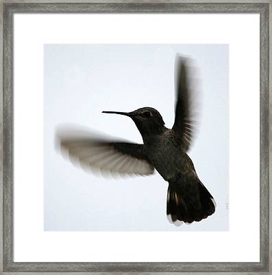 Framed Print featuring the digital art As She Flies by Holly Ethan