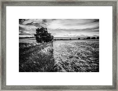 As The Wind Blows Framed Print