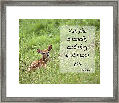 Framed Print featuring the photograph Ask The Animals by Jeannette Hunt