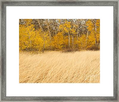 Aspen And Grass Framed Print