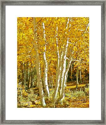 Aspen Claws Framed Print