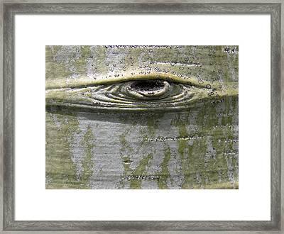 Aspen Eye Framed Print