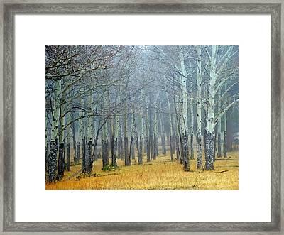 Aspen Fog Framed Print by Ken Smith