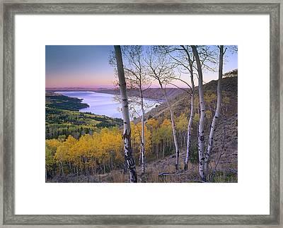 Aspen Forest Overlooking Fremont Lake Framed Print