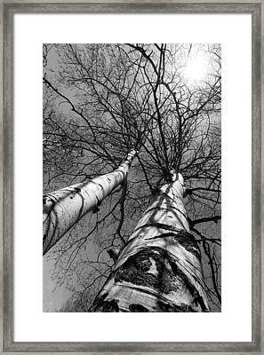 Aspen Glow Framed Print by Colleen Coccia
