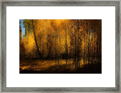 Framed Print featuring the photograph Aspen Glow by Randy Wood