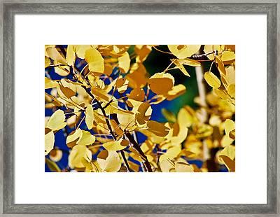Aspen Gold Medallions Framed Print