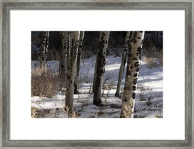 Framed Print featuring the photograph Aspen Grove by Angelique Olin