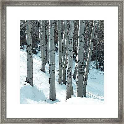Aspen Have Eyes Framed Print