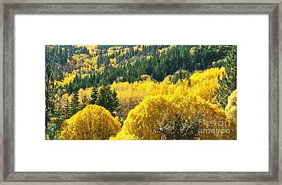 Aspen Hunt Framed Print
