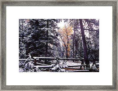 Aspen In Snow Framed Print by Barry Shaffer
