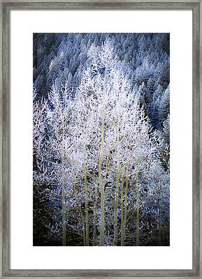 Aspen Lace Framed Print by Beth Riser