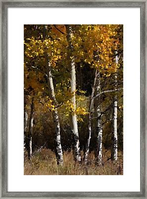 Aspen Palate Knife Framed Print by Judy Deist